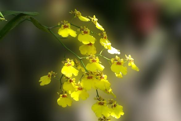 orchidee-aussergewoehlich-beitrag