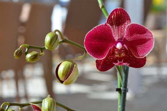 orchideen-pflegen-geschlossene-blueten-beitrag