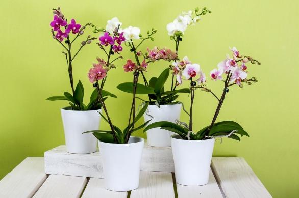 orchideen-zubehoer-beitrag