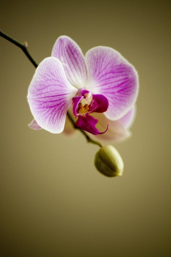 orchideen-schneiden