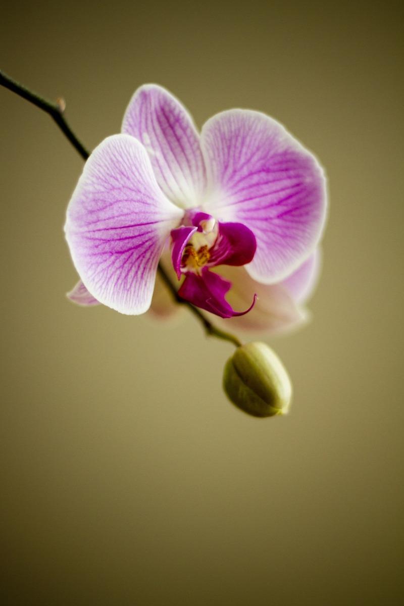 orchideen schneiden orchideen umtopfen und tipps f r. Black Bedroom Furniture Sets. Home Design Ideas